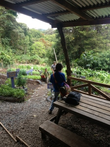 Part of the curriculum includes working in the garden at Creativa