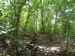 The trails at Hidden Valley are well-maintained. It is a beautiful part of the cloud forest.