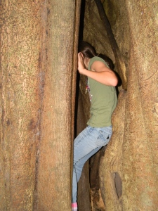 Kara climbing inside the strangler fig.