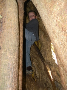 Tristan climbing inside a strangler fig at Hidden Valley Trail.